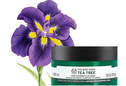 The Body Shop Tea Tree skin clearing clay Mask茶树泥状面膜
